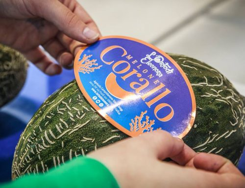 Corallo: il nuovo melone de L'Orto di Eleonora che vale una medaglia d'oro